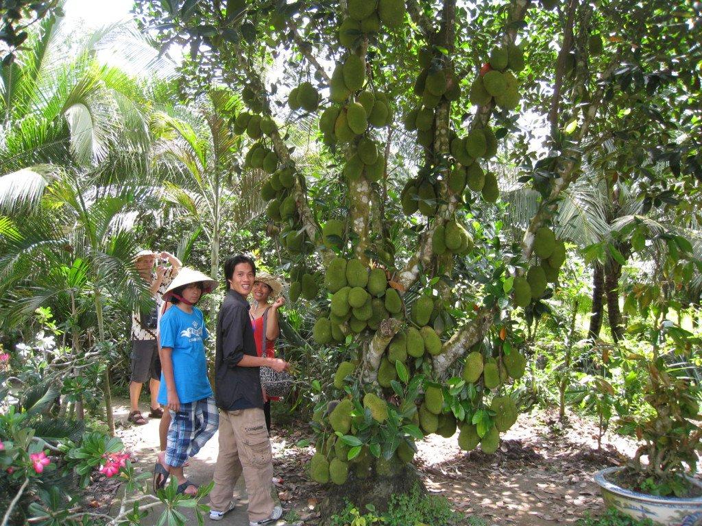 Homestay Mỹ Thuận và mô hình cây trái