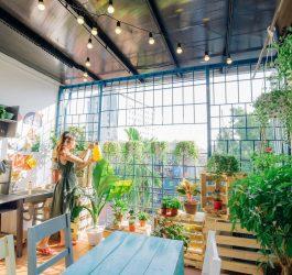 vườn cây thu nhỏ tại phòng garden
