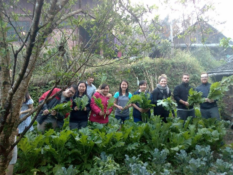 Vườn rau sạch ở Dzay house