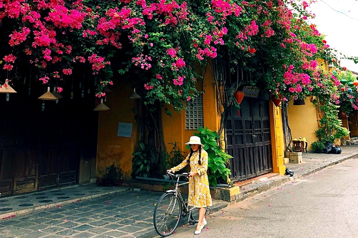 Bức tường vàng hoa giấy tại phố Cổ